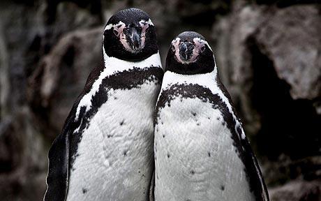penguins_1595580c.jpg